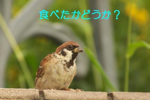 070_20111009223801.jpg