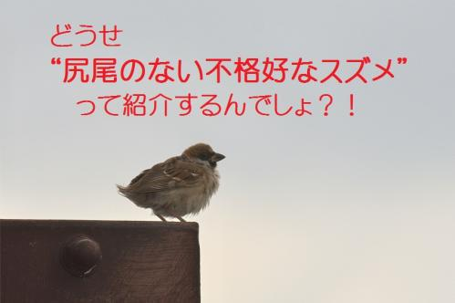 070_20111012232522.jpg