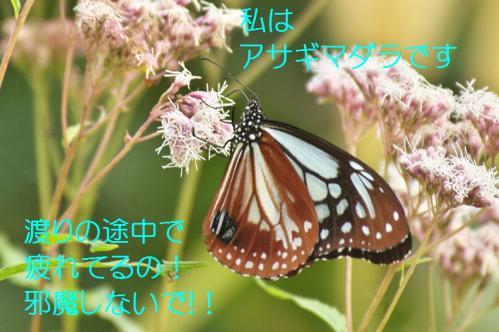 070_20111016185228.jpg