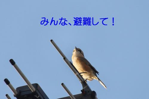 070_20111017220541.jpg