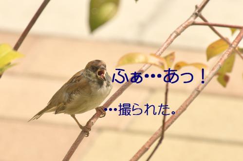 070_20111019222209.jpg