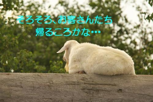 070_20111024220109.jpg