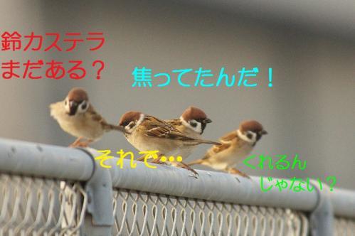 070_20111128225116.jpg