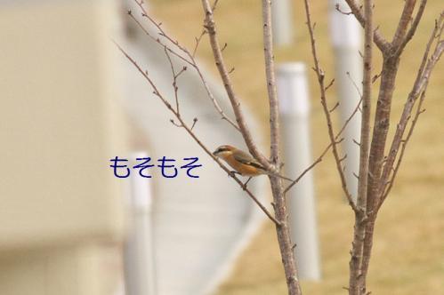 070_20111227210010.jpg
