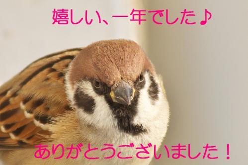 070_20111230192707.jpg