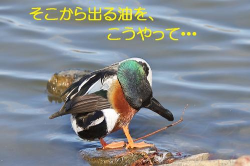 070_20120125231840.jpg