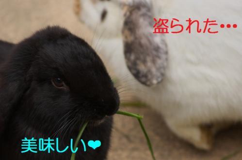 070_20120130221452.jpg