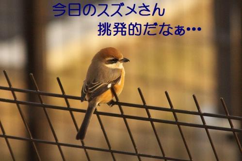 070_20120202223055.jpg