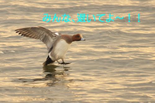 070_20120205210156.jpg
