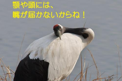 070_20120215214706.jpg
