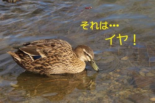 070_20120228213654.jpg