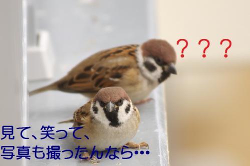 070_20120229214359.jpg