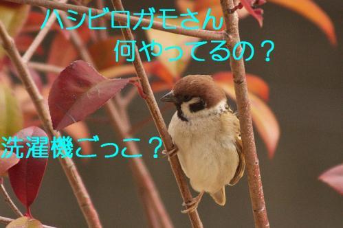 070_20120319224713.jpg