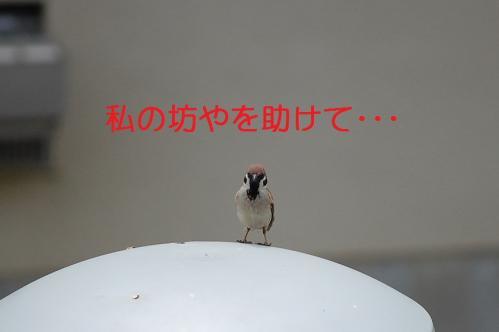 075_20110131212041.jpg