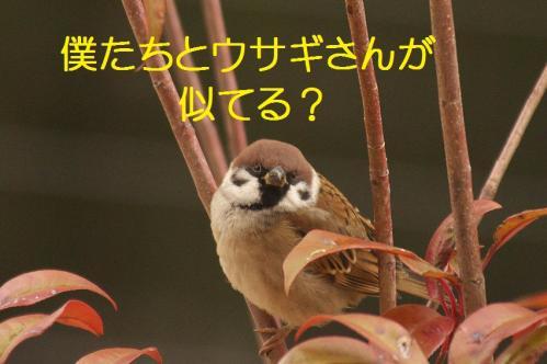 075_20120130221612.jpg