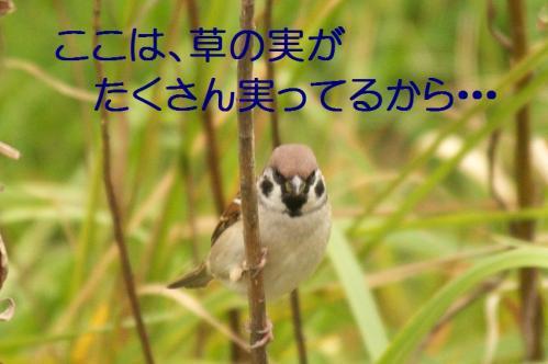 07_20101101224601.jpg