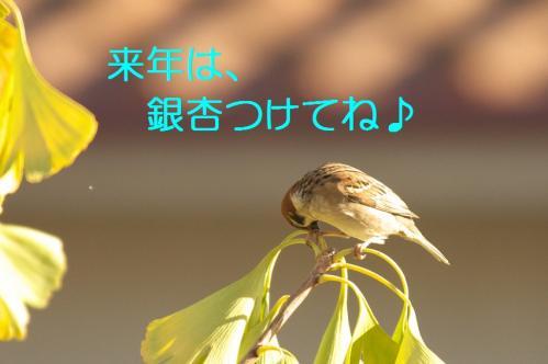080_20101130191717.jpg