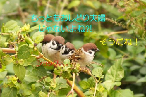 080_20101219200255.jpg