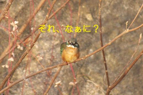 080_20110123204052.jpg