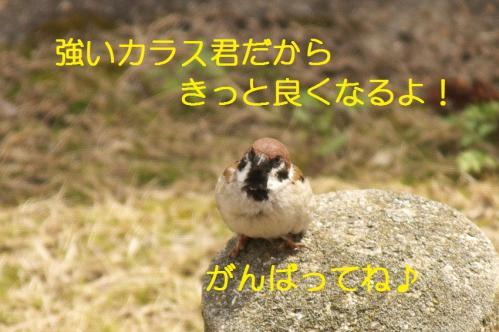 080_20110331222330.jpg