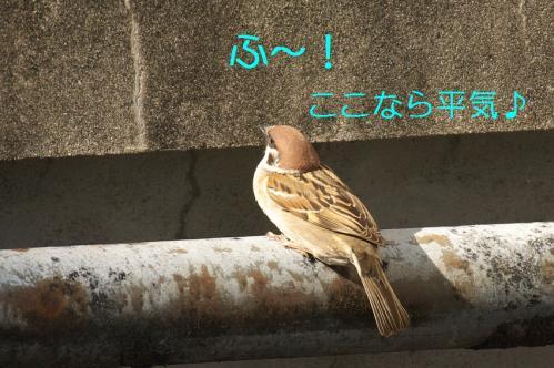 080_20110430201915.jpg