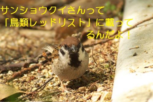 080_20110505204207.jpg
