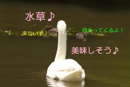 080_20110531202316.jpg