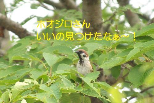 080_20110730220729.jpg