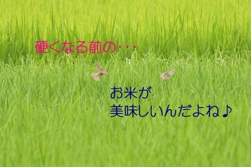 080_20110806212207.jpg