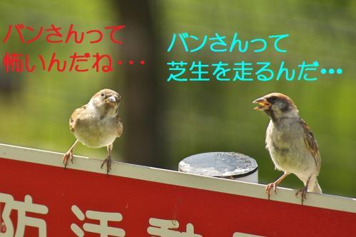 080_20110828211317.jpg