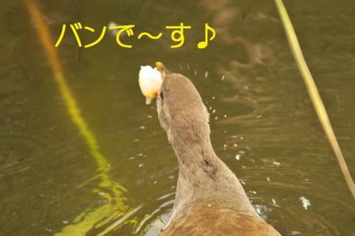 080_20110829224909.jpg