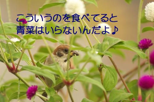 080_20111002232558.jpg