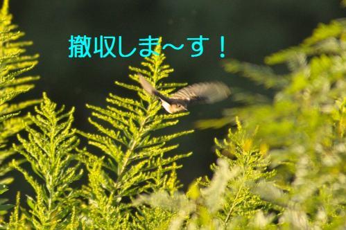 080_20111004221559.jpg