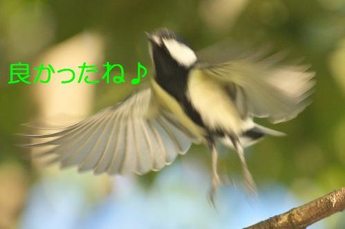 080_20111005213531.jpg