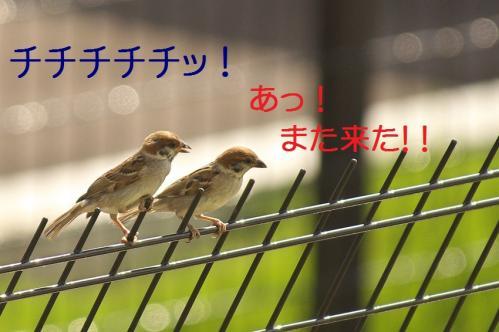 080_20111006190938.jpg