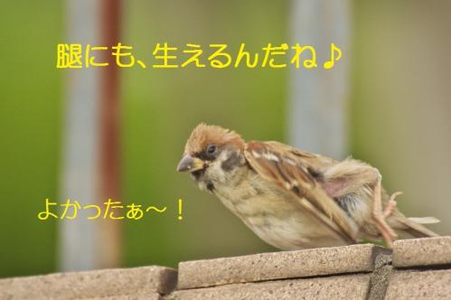 080_20111007221238.jpg
