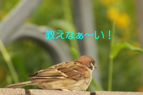 080_20111009223800.jpg
