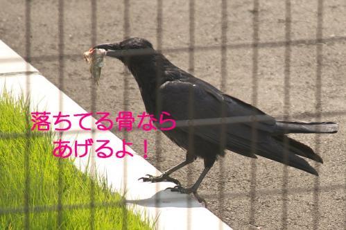080_20111011210142.jpg