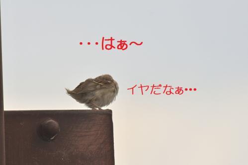 080_20111012232521.jpg
