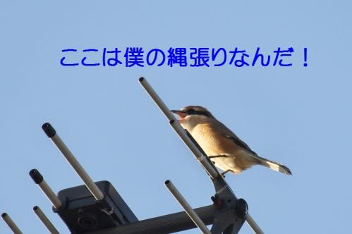 080_20111017220540.jpg