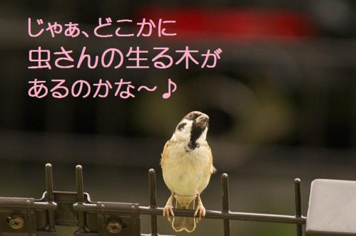080_20111031213713.jpg
