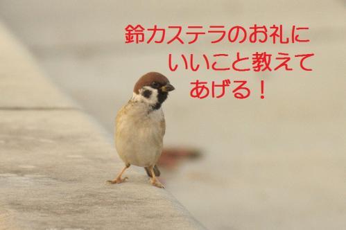 080_20111128225115.jpg