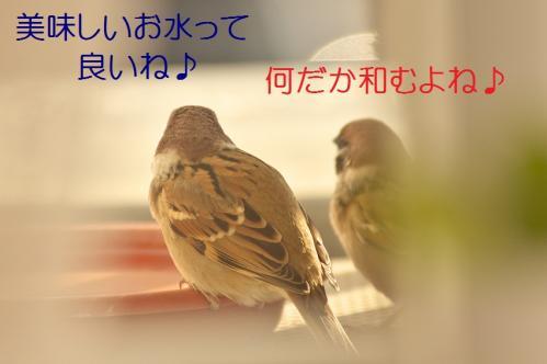 080_20111228225547.jpg