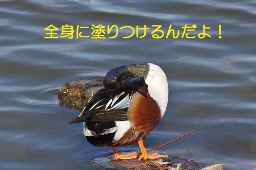 080_20120125231840.jpg