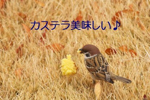 080_20120130221610.jpg