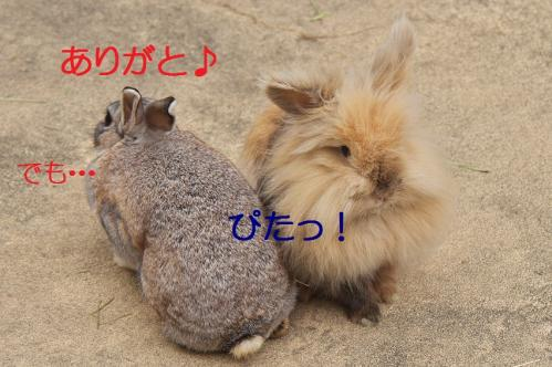080_20120131202633.jpg