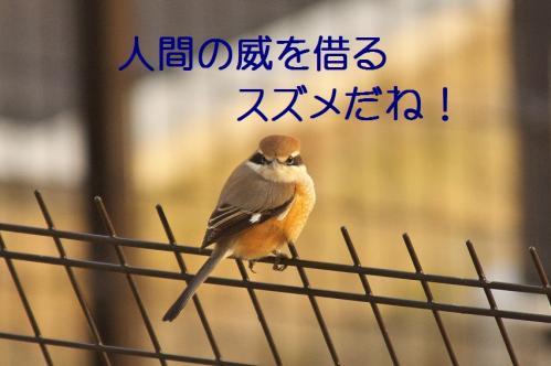 080_20120202223054.jpg