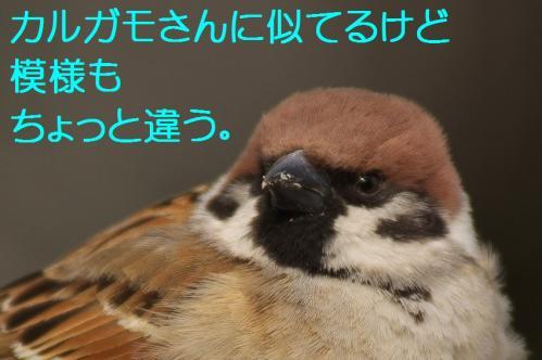 080_20120228213653.jpg