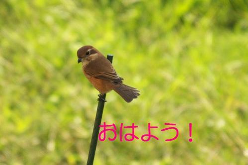 08_20101103223537.jpg