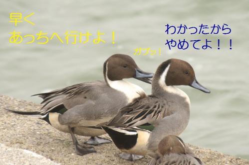 090_20101210214604.jpg